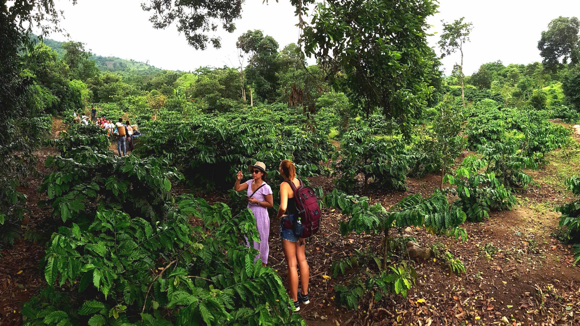 Kaffeeplantagen Trekkingreise Touristen in Dak Lak Provinz Vietnam