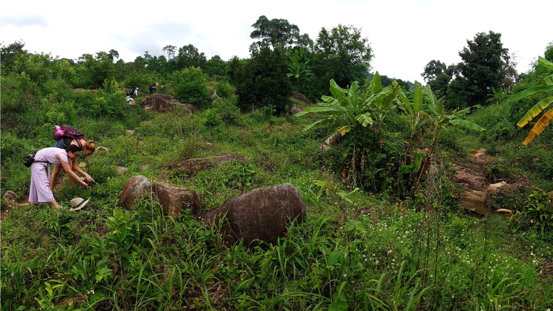 Kaffeeplantagen Trekking Reise Touristen entdecken Natur in Dak Lak Provinz Vietnam